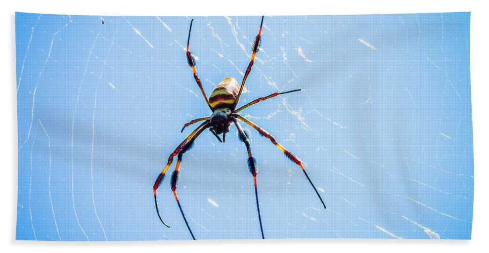 Banana Spider Hand Towel featuring the photograph Sky Blue Web by Marilee Noland