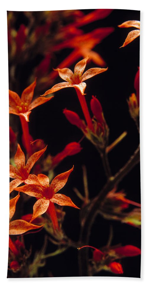 Wildflowers Bath Sheet featuring the photograph Sky Rocket by Leland D Howard