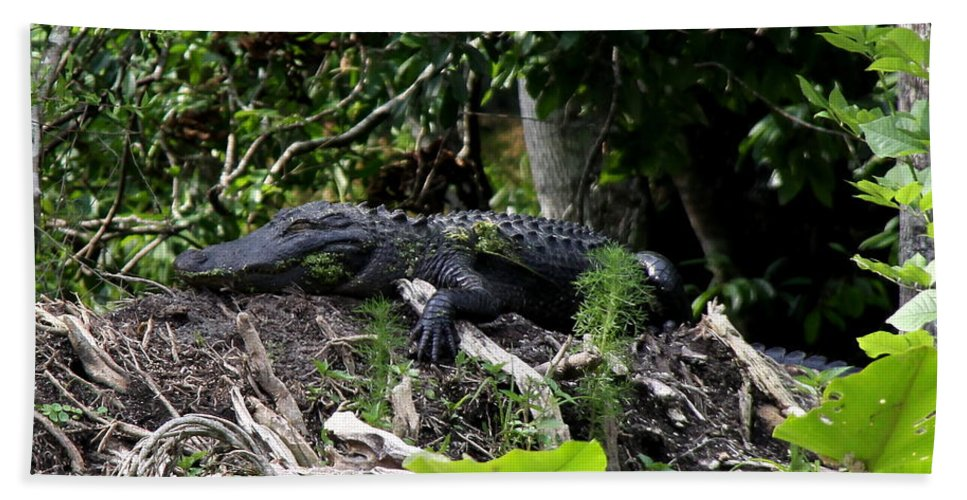 American Alligator Hand Towel featuring the photograph Sleeping Alligator by Barbara Bowen