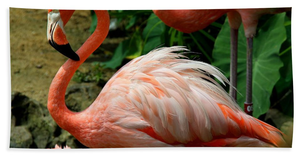 Pink Flamingo Hand Towel featuring the photograph Sleeping Flamingo by Barbara Bowen