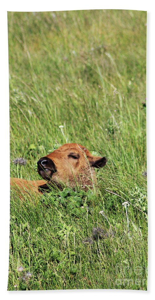 Buffalo Bath Sheet featuring the photograph Sleepy Calf by Alyce Taylor