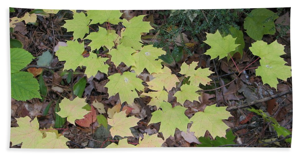 Leaves Hand Towel featuring the photograph Slow Fade by Kelly Mezzapelle