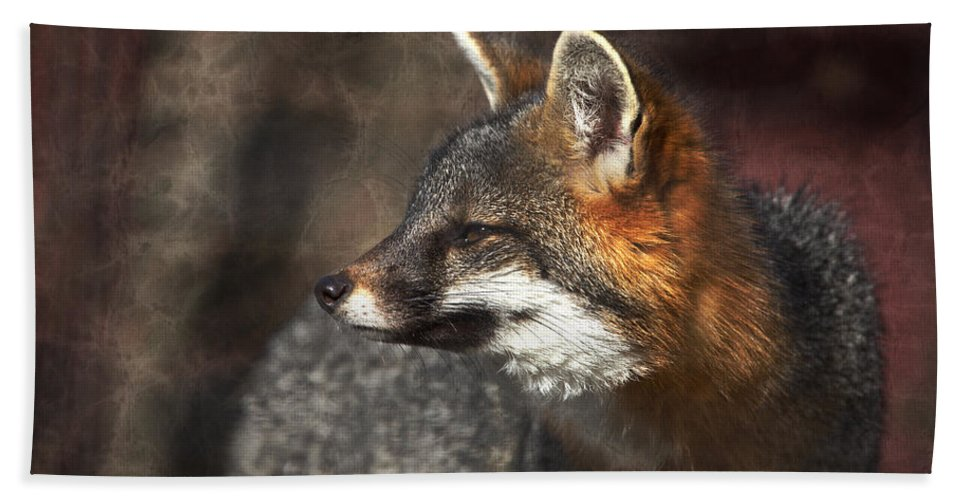 Gray Fox Hand Towel featuring the photograph Sly As A Fox by Karol Livote