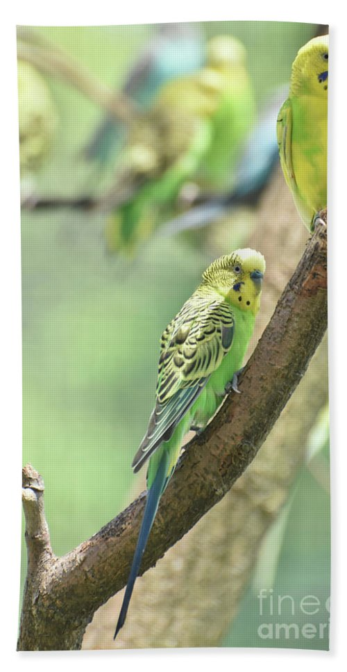 Budgie Hand Towel featuring the photograph Small Budgie Birds With Beautiful Colored Feathers by DejaVu Designs