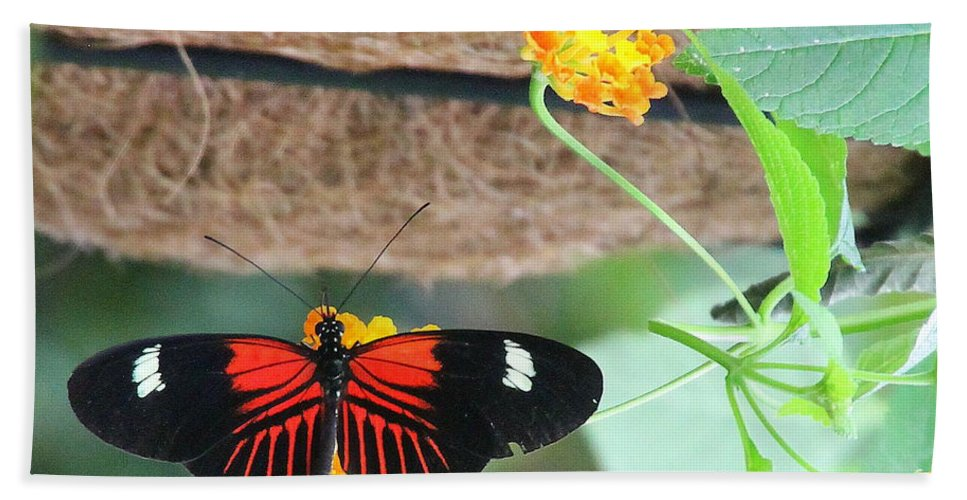 Small Postman Bath Towel featuring the photograph Small Postman Butterfly by Laurel Talabere