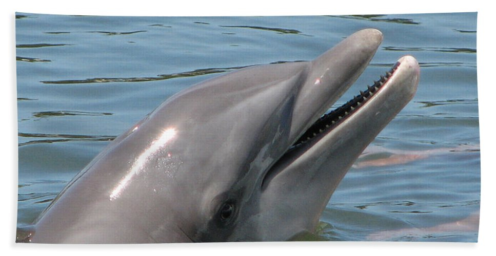 Dolphin Bath Sheet featuring the photograph Smile by Stacey May