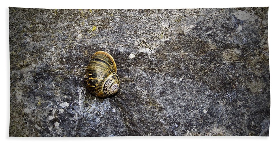 Irish Bath Towel featuring the photograph Snail At Ballybeg Priory County Cork Ireland by Teresa Mucha