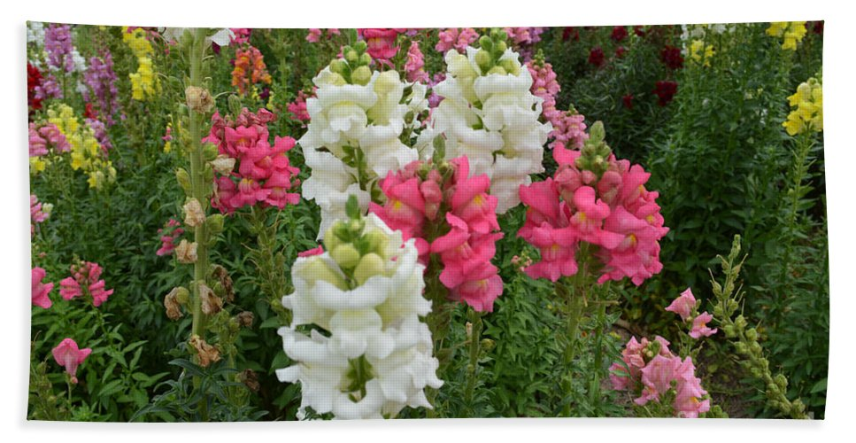 Snapdragons Hand Towel featuring the photograph Snapdragons by To-Tam Gerwe