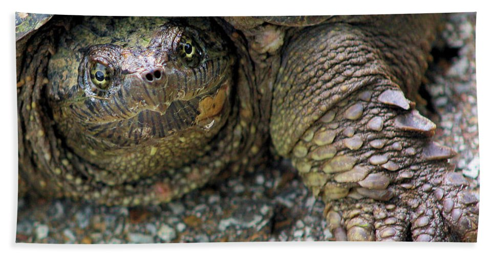 Snapping Turtle Bath Sheet featuring the photograph Snapping Turtle by Kristin Elmquist