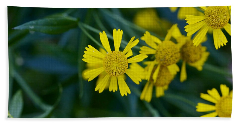 Abstract Hand Towel featuring the photograph Sneezeweed by Jack R Perry