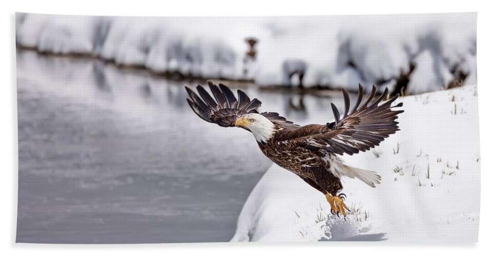 Bald Eagle Bath Sheet featuring the photograph Snow Ballet by Jim Chagares