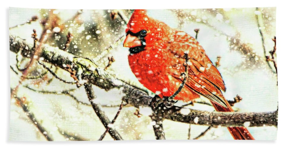 Cardinal Hand Towel featuring the photograph Snow Cardinal by Tina LeCour