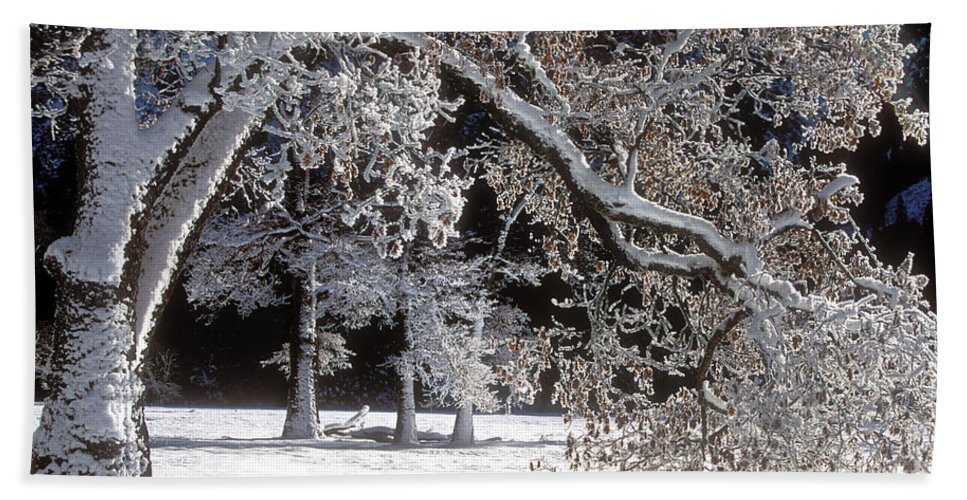Black Oak Hand Towel featuring the photograph Snow Covered Black Oak Yosemite National Park by Dave Welling