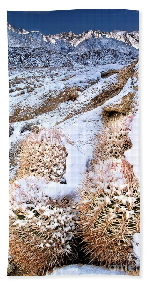 North America Bath Sheet featuring the photograph Snow Covered Cactus Below Mount Whitney Eastern Sierras by Dave Welling