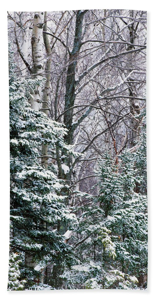 Photography Bath Sheet featuring the photograph Snow-covered Forest, Wisconsin, Usa by Panoramic Images