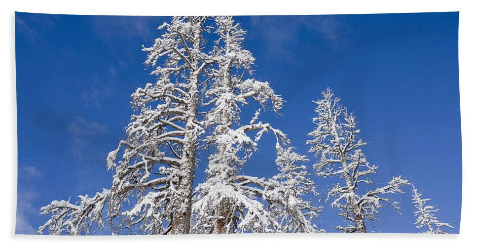 Winter Bath Sheet featuring the photograph Snow Covered by Kelley King