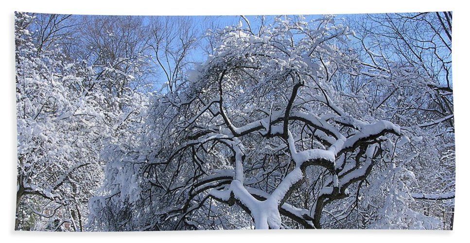 Apple Tree Hand Towel featuring the photograph Snow-covered Sunlit Apple Trees by Byron Varvarigos