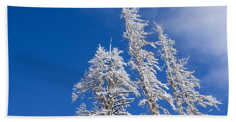 Winter Bath Sheet featuring the photograph Snow Covered Trees by Kelley King