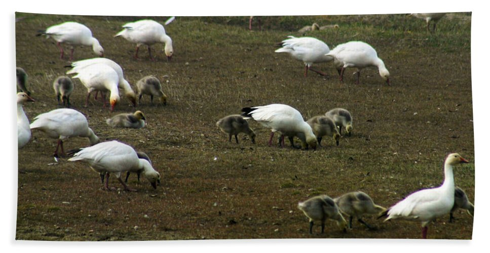 Snow Geese Bath Towel featuring the photograph Snow Geese by Anthony Jones