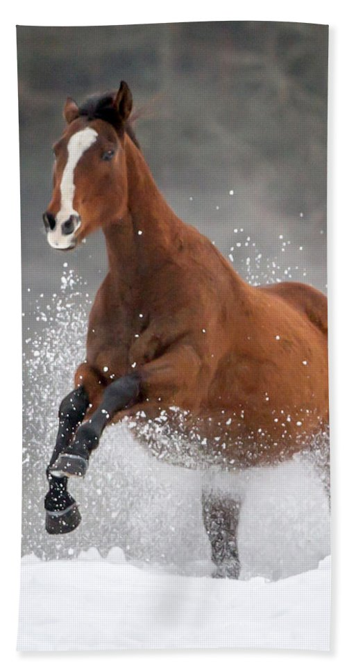Horses Hand Towel featuring the photograph Snow Horse by Jack Bell