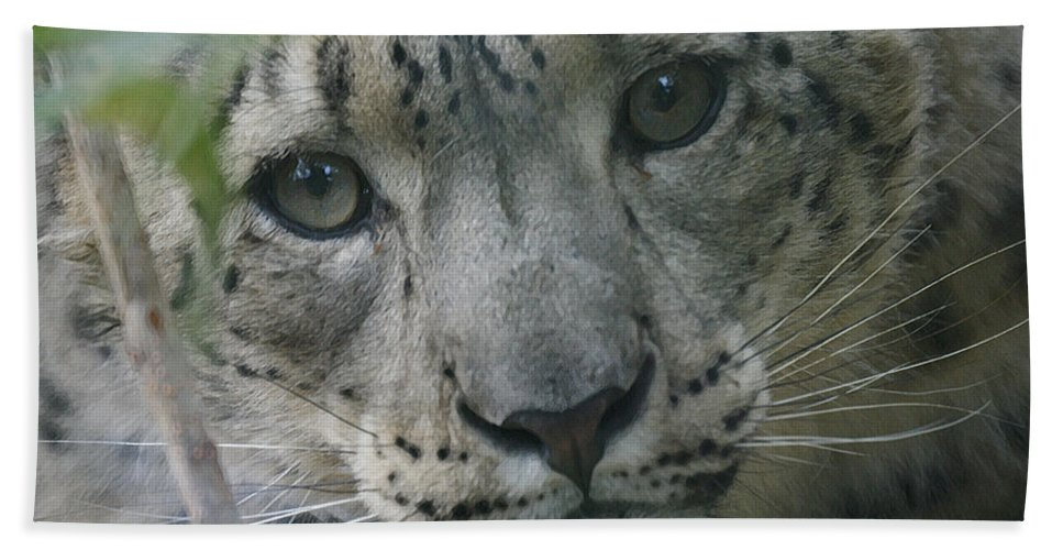 Animals Bath Sheet featuring the photograph Snow Leopard 10 by Ernie Echols