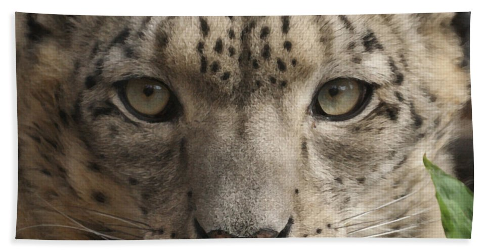 Animals Hand Towel featuring the photograph Snow Leopard 13 by Ernie Echols