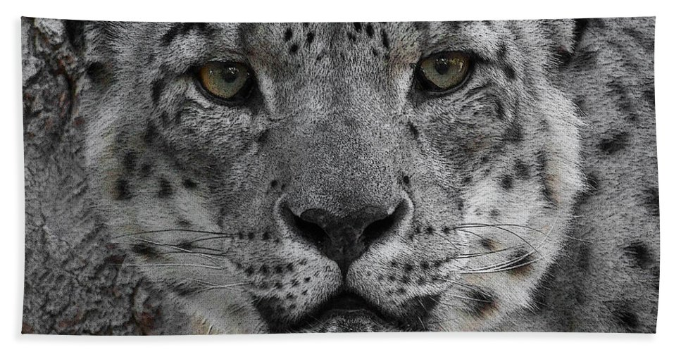 Animals Bath Sheet featuring the photograph Snow Leopard 5 Posterized by Ernie Echols
