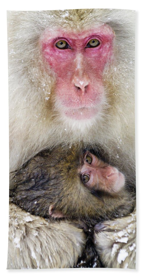 Japan Hand Towel featuring the photograph Snow Monkey Love by Michele Burgess