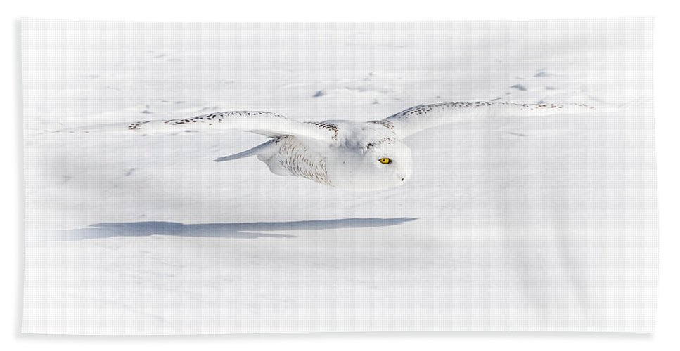 Animals Hand Towel featuring the photograph Snow Owl Glide by Rikk Flohr