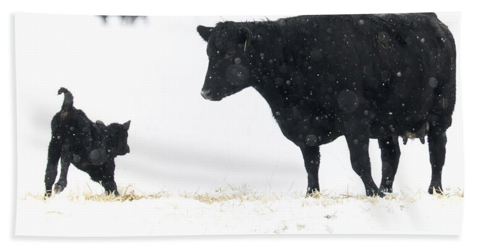 Calf Hand Towel featuring the photograph Snow play by Mike Dawson
