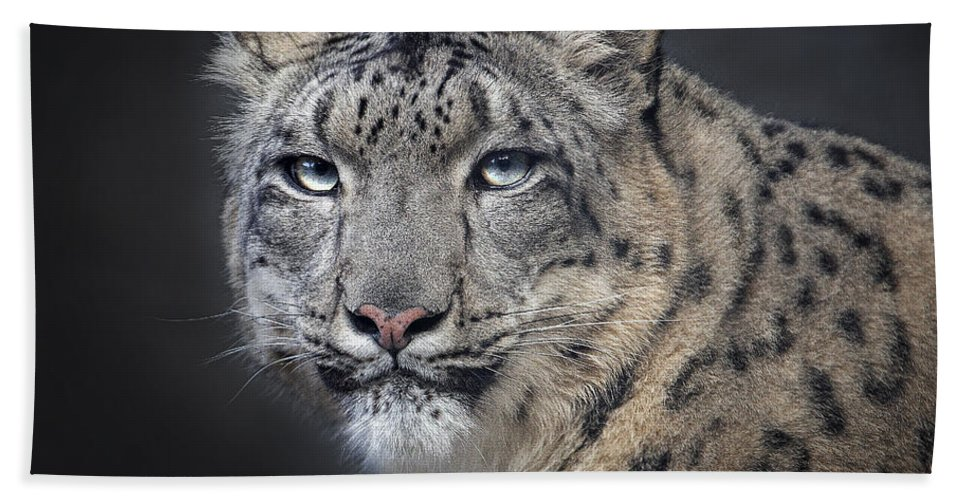 Snow Leopard Bath Sheet featuring the photograph Snow Queen by Emma England