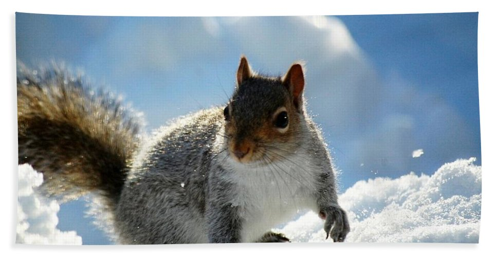 Squirrel Bath Sheet featuring the photograph Snow Squirrel by Bob Cuthbert