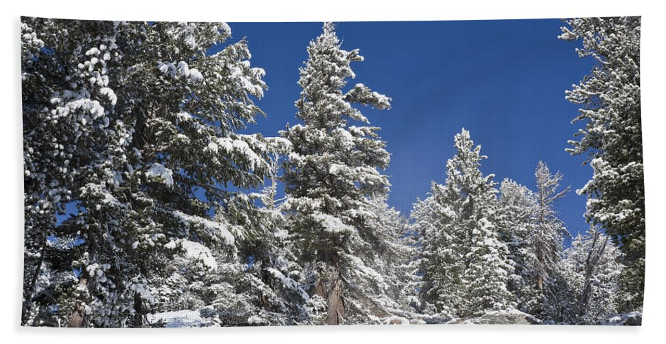 Winter Hand Towel featuring the photograph Snowscape 2 by Kelley King