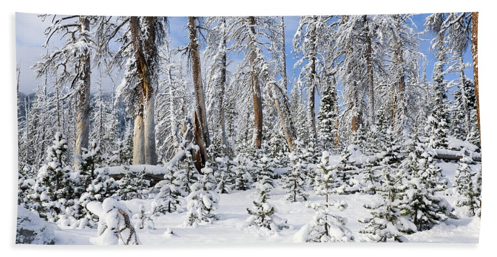 Winter Hand Towel featuring the photograph Snowscape by Kelley King