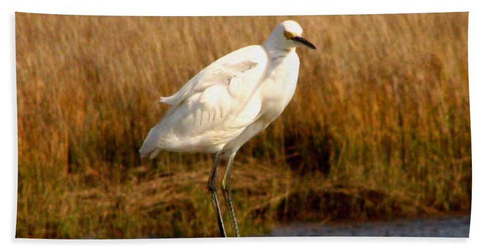 Bird Egret snowy Egret white Egret Seabird Animals Nature Wildlife Hand Towel featuring the photograph Snowy Egret 3 by J M Farris Photography