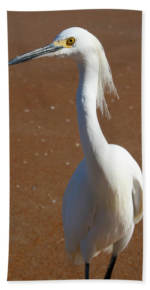 Bird Beach Sand White Bright Yellow Curious Egret Long Neck Feather Eye Ocean Hand Towel featuring the photograph Snowy Egret by Andrei Shliakhau