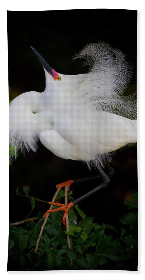 Snowy Egret Hand Towel featuring the photograph Snowy Egret by Dennis Goodman