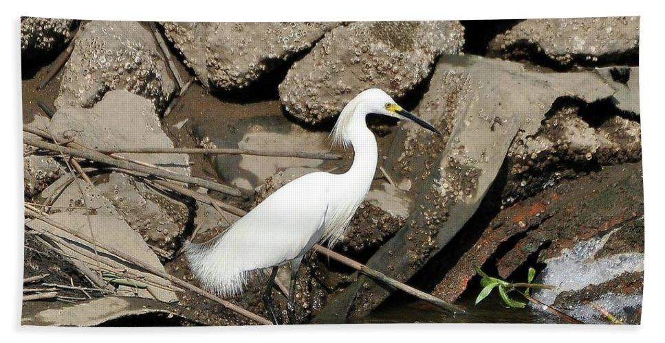 Snowy Egret Hand Towel featuring the photograph Snowy Egret Fishing by Al Powell Photography USA