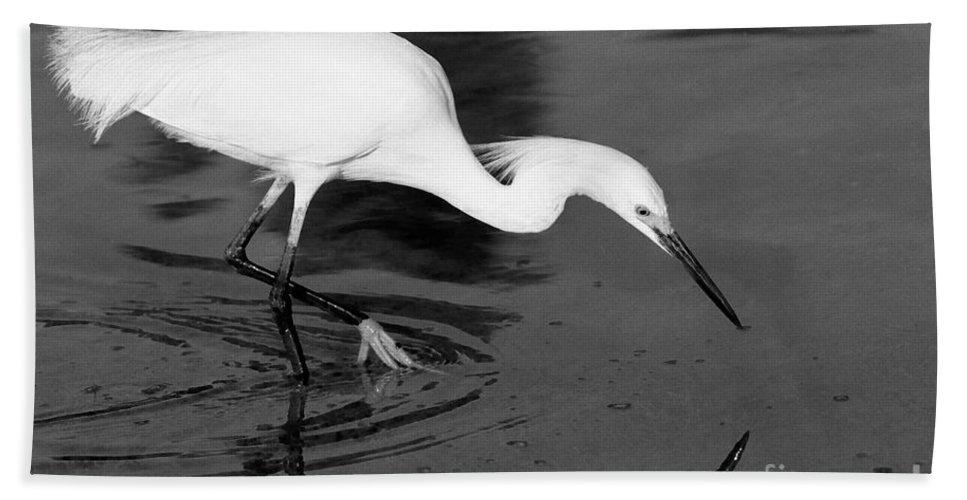 Egret Bath Sheet featuring the photograph Snowy Egret Fishing by John Harmon
