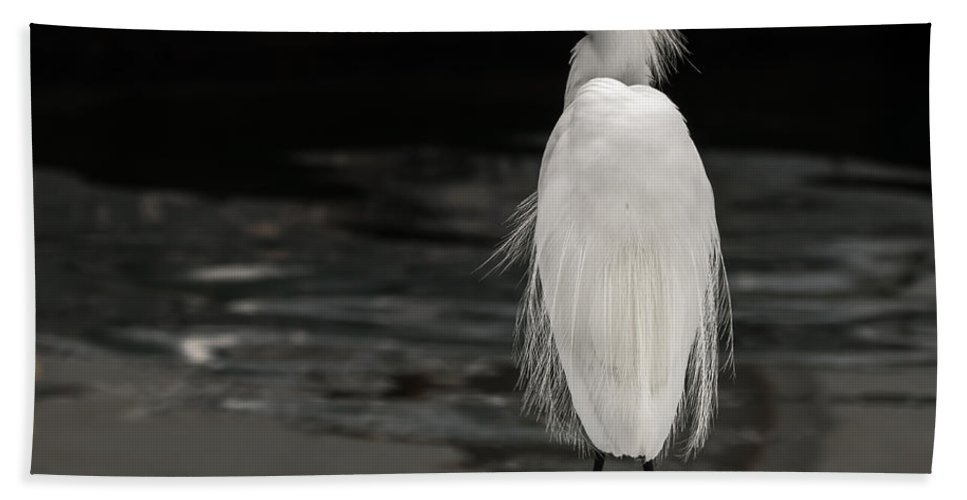 Birds Bath Sheet featuring the photograph Snowy Egret Looking For Next Meal by Ernie Echols