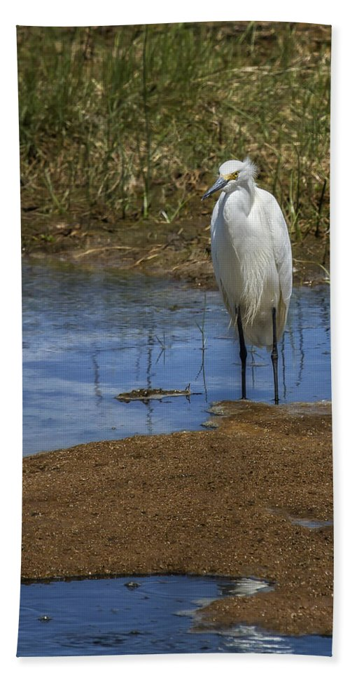 Snowy Egret Hand Towel featuring the photograph Snowy Egret Of Chincoteague No. 3 by Belinda Greb