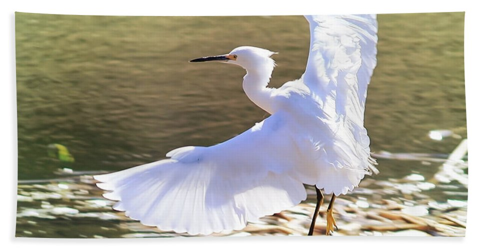 Egret Hand Towel featuring the photograph Snowy Egret Over Golden Pond by Carol Groenen