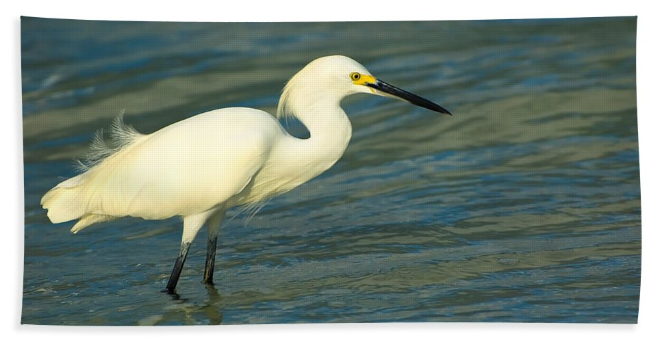 Animal Bath Towel featuring the photograph Snowy Egret by Rich Leighton
