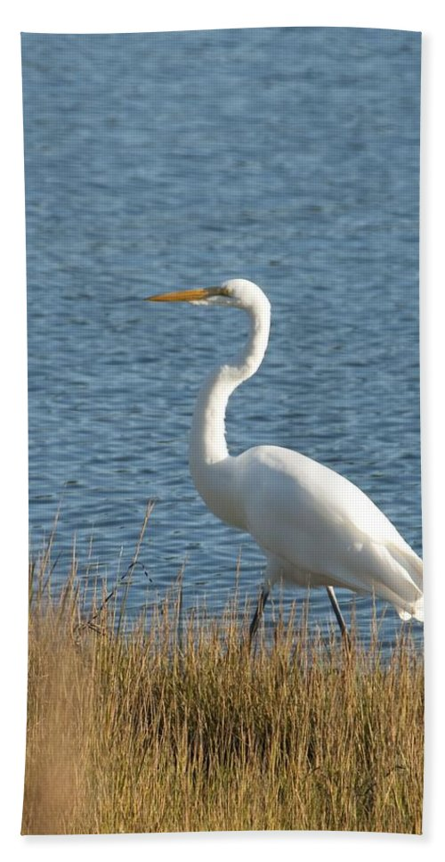Egret Bath Sheet featuring the photograph Snowy Egret by Steven Natanson