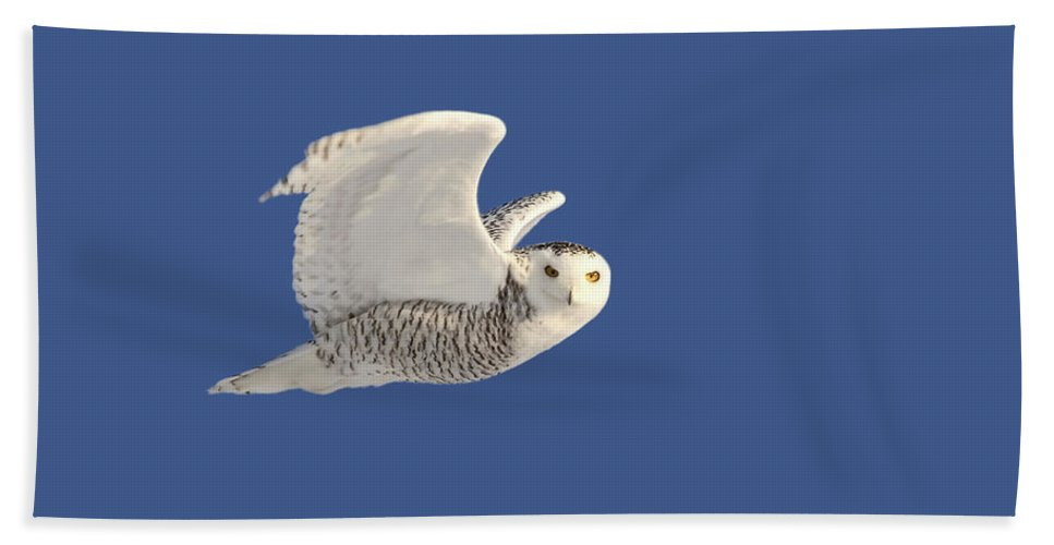 Snowy Owl Hand Towel featuring the digital art Snowy Owl In Flight by Mark Duffy