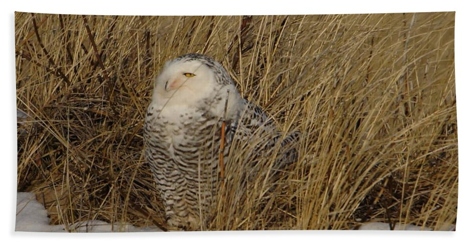 Snowy Owl Bath Sheet featuring the photograph Snowy Owl In Grass by J R Sanders