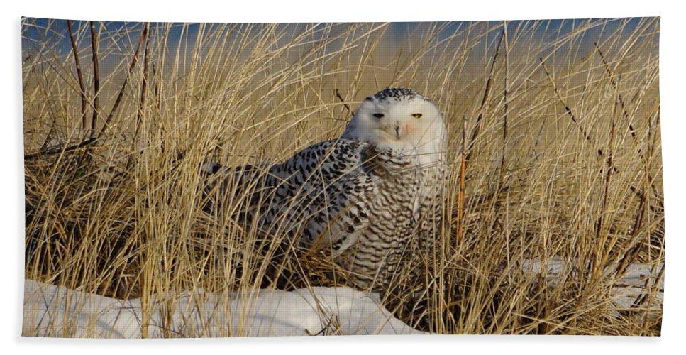 Snowy Owl Bath Sheet featuring the photograph Snowy Owls On The Beach by J R Sanders