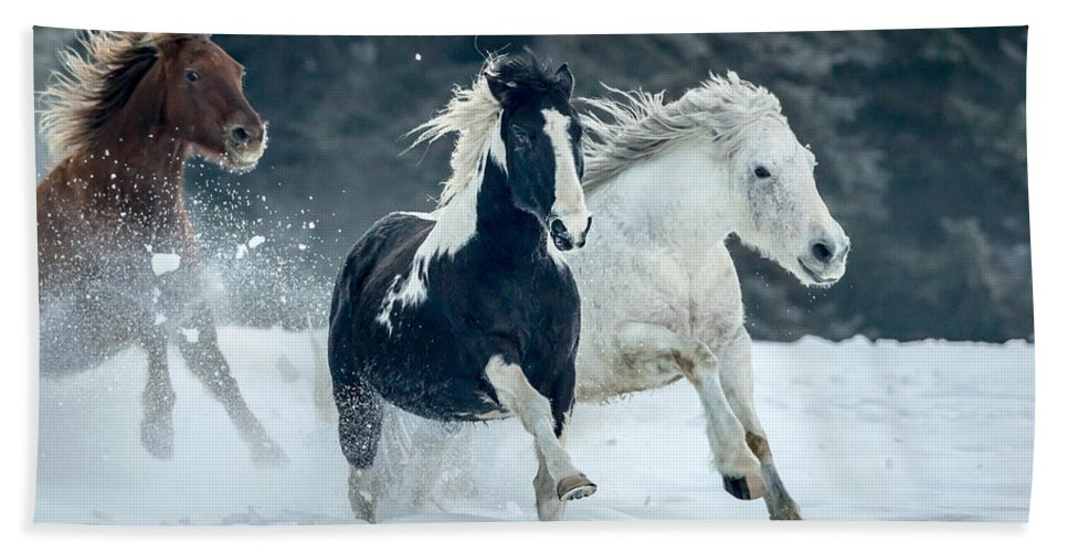 Horses Hand Towel featuring the photograph Snowy Run by Jack Bell