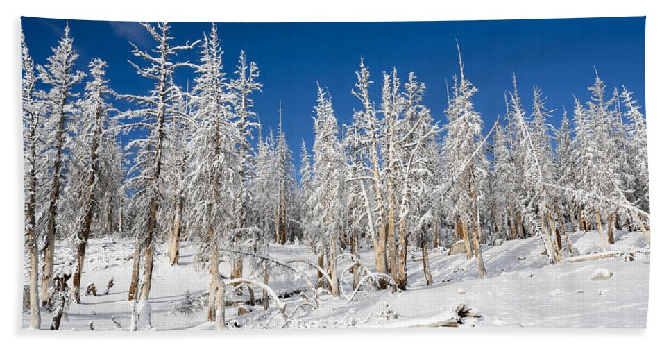 Winter Bath Sheet featuring the photograph Snowy Trees by Kelley King