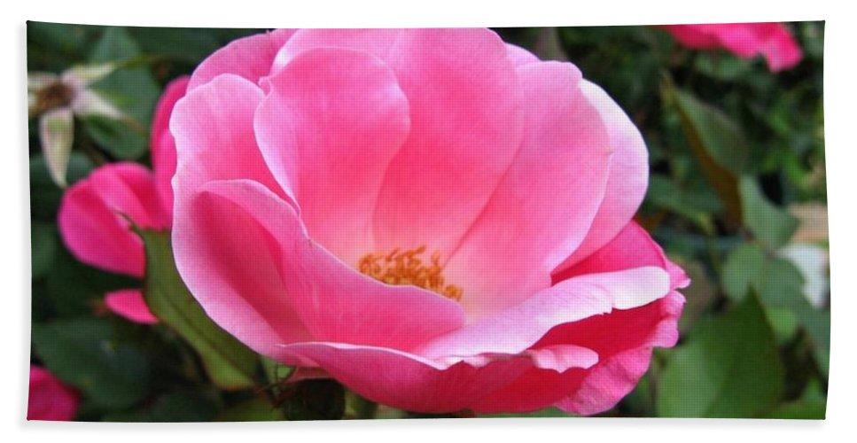 Flower Bath Sheet featuring the photograph So Pretty by Rhonda Barrett
